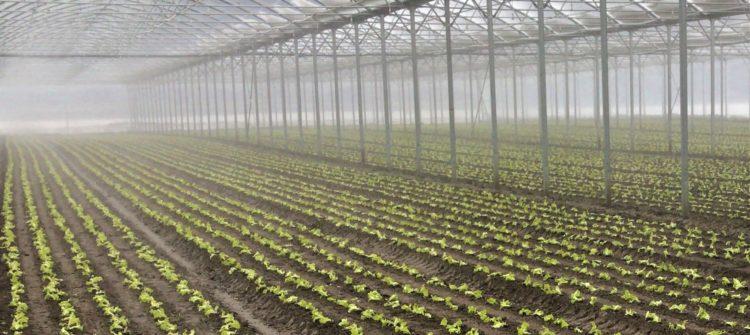erster Salat_Feb. 2018