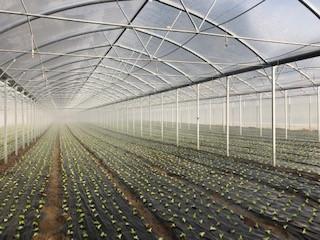 Salat Tunnel Frühjahr 2019